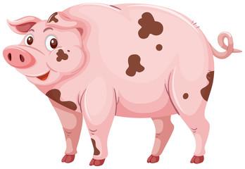 A dirty mud pig