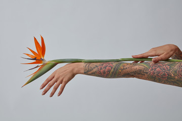An orange strelitzia flower decorates a female hand on a gray background with a copy space