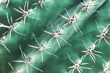 Spiny green cactus close-up, texture, background