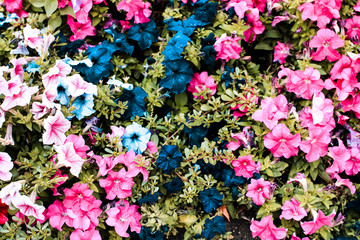 colorful flowerbed in the garden. view from above.