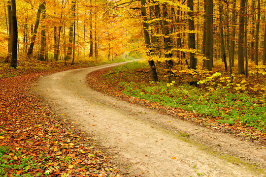 Winding Dirt Road through Forest in Autumn, Leaves Changing Colour