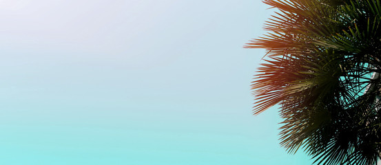 Wall Mural - Website banner with copy space in blue color and palm tree in corner. Concept of Los Angeles and cheap travel agency, summer blog header.