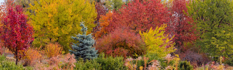 Various trees and shrubs with autumn varicolored leaves