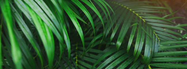 Wall Mural - Website header and banner of tropical palm leaves an foliage. Concept of blog heading, tropical theme, summer blog header. flora and plants.
