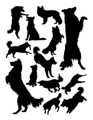 Collie dog animal silhouette. Good use for symbol, logo, web icon, mascot, sign, or any design you want.