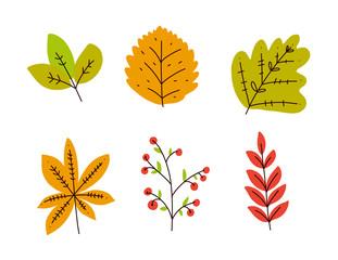 Autum season design. Leaves hand drawn vector set illustration.