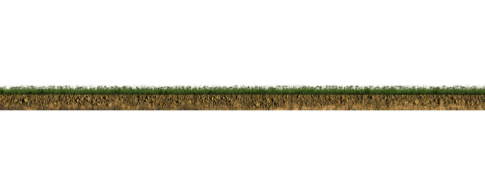 grass section