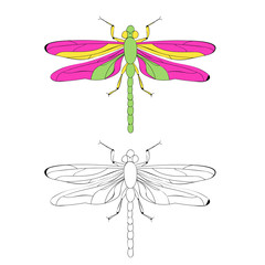 vector, isolated, book coloring dragonfly