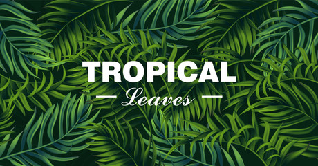 Tropic leaves card Vector realistic. detailed 3d exotic palm leaf banners
