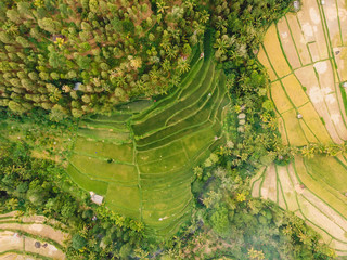 Rice fields in Bali island. Aerial view with terraces and palms