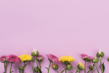 Row of unripe flowers on pink background. Copyspace, free space for text.