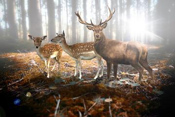 Hirsch und Rehe im Wald Wall mural