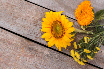 Young baby sunflowers on wood. Old vintage wooden desk surface background.