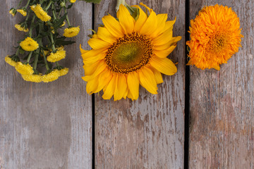 Unripe sunflowers and dahlia flowers. Old vintage wooden desk surface background.