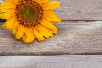 Colorful unripe sunflower head. Old vintage wooden desk surface background.