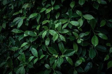 tropical leaves design darker vignette background