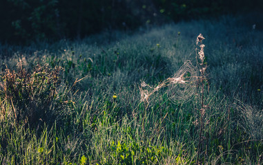 Morning nature in sunlight and dew