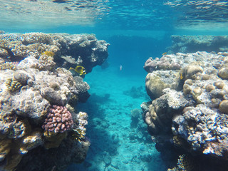 Amazingly beautiful coral reef, a lot of fish