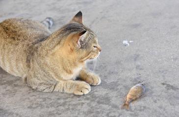 魚を横目で見る猫