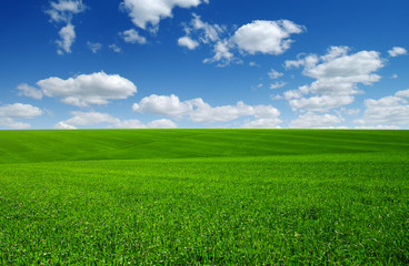 Photo sur Toile Sauvage green field and clouds