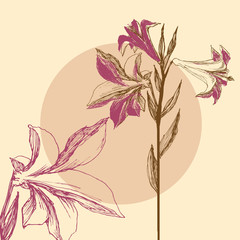 Fototapete - Lily background, floral greeting card, invitation, bridal shower
