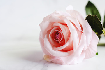 Pink artificial rose flower on white marble background for love concept
