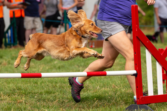 Agility show held at the Usk Show Ground on 21st and 22nd July 2018. Saturday competition held in overcast and some sunny conditions - Sunday held with sunny conditions.