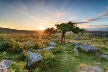 Fototapete - Sunset at Combestone on Dartmoor
