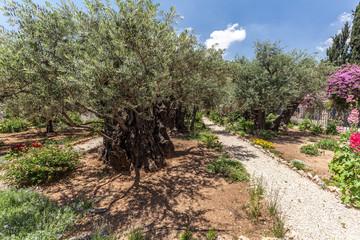 Nice view of garden Gethsemane