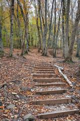 Деревянная лестница на горной лесной тропе