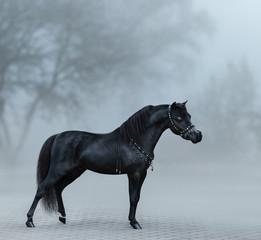Wall Mural - Beautiful black miniature horse standing in fog.