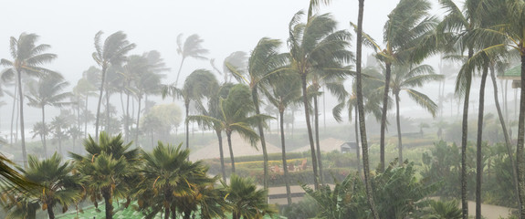 Foto op Canvas Palm boom Palm trees blowing in the wind and rain as a hurricane approaches a tropical island coastline