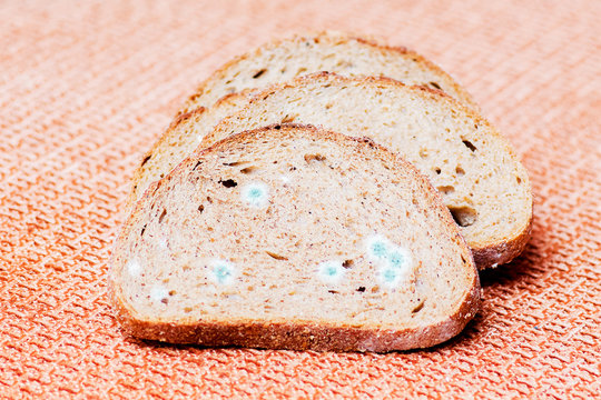 Mildew on a slice of bread. Stale bread, covered with mildew_