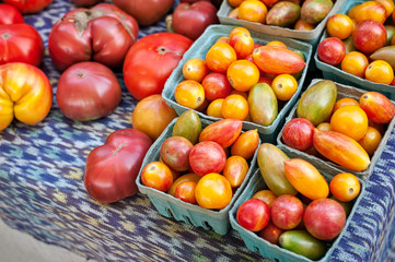 Assorted tomatoes on sale at a farmers market.