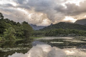 Beautiful wild lake landscape in the atlantic rainforest with lush green vegetation, REGUA Ecological Reserve, Rio de Janeiro, Brazil
