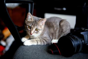 Little Gray Kitten and Camera
