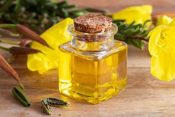 A bottle of evening primrose oil with fresh evening primrose flowers, pods and seeds