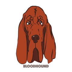 Bloodhound head vector illustration. Hand drawn dog portrait. Basset dog face on white background. Sketch of purebred dog. T-shirt print idea for pet lovers.