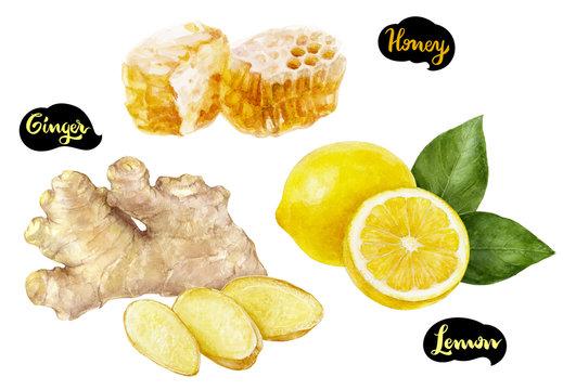 Ginger honey lemon watercolor hand drawn illustration