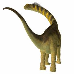 Camarasaurus Dinosaur Tail