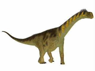 Camarasaurus Dinosaur Side Profile