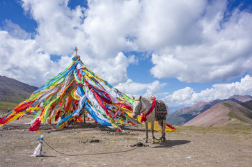 Tibetan prayer flags and a horse in Qinghai, China