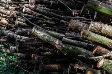 Polter Holzlager Wald