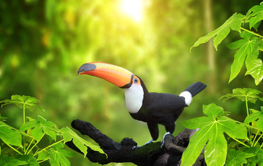 Foto op Plexiglas Toekan HBeautiful colorful toucan bird