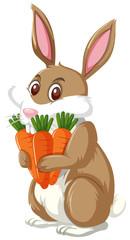 Cute bunny holding carrots