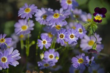 FLOWERS - violet violet