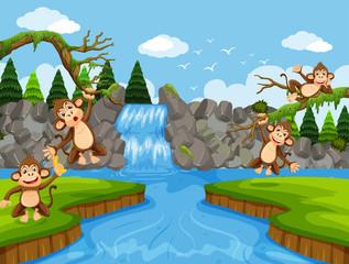 Cute monkeys in jungle scene