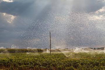 Cultivos agrícolas y riego por aspersión. El Páramo, León, España.