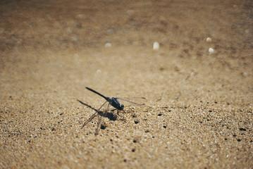 libellula in spiaggia