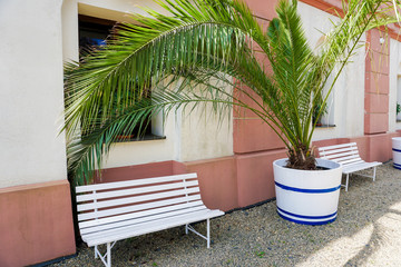 Wall Mural - Palm house green plant near white bench and house. Concept of tropic house plants.